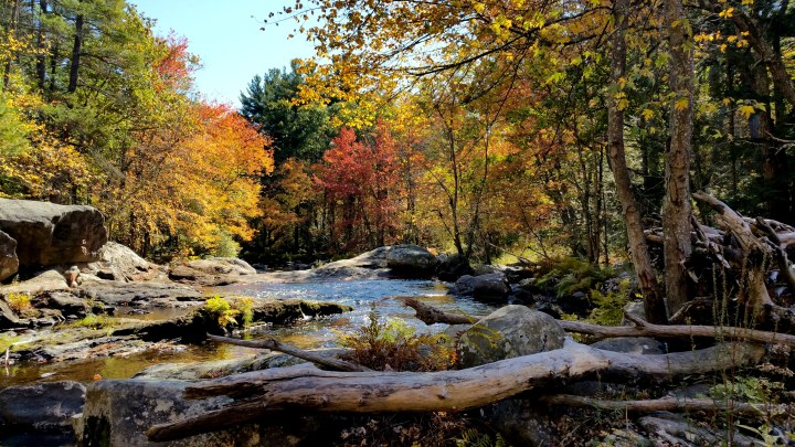 Alex Heads to New Hampshire PT 2: Wildcat Falls Conservation Area