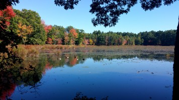 9 Sakowich Reservation Ducks Swamp