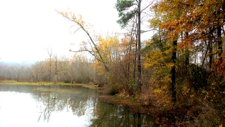 8 Constitution Lakes in the Fall.jpg