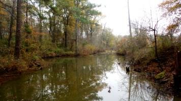 13 Constitution Lakes Swamp