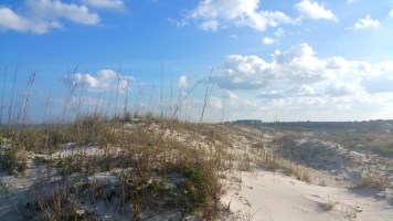 10 Anastasia State Beach Park Sand Dunes