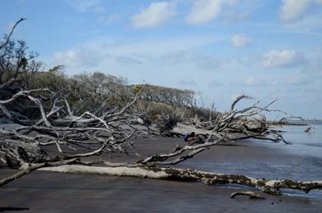 19 Alexis Chateau Driftwood Beach