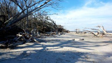 20 Blackrock Beach White Driftwood Blue Skies