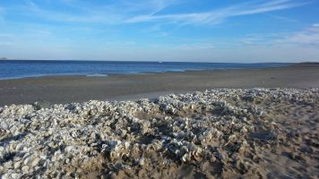 25 Graveyard of Shells at Blackrock Beach