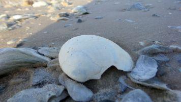29 Blackrock Beach Seashells