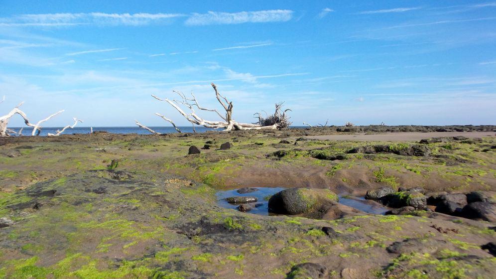 3 Blackrock Beach Green Algae White Driftwood