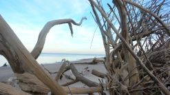 35 Blackrock Beach White Driftwood Through the Trees