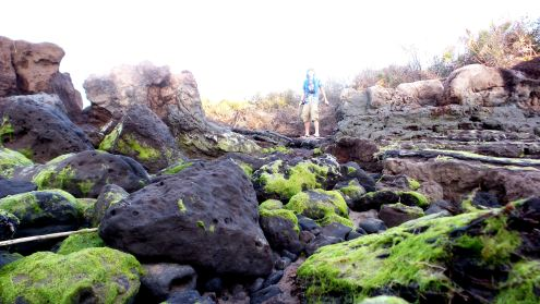 37 Blackrock Beach Winston Murray Green Algae on Black Rocks