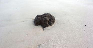 40 Blackrock Beach Nature