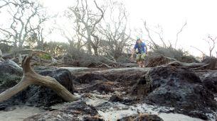 48.1 Blackrock Beach Driftwood Winston Murray