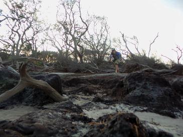 48.2 Blackrock Beach Driftwood Winston Murray