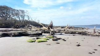 7 Blackrock Beach Green Algae White Driftwood