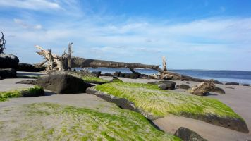 9 Blackrock Beach Green Algae White Driftwood