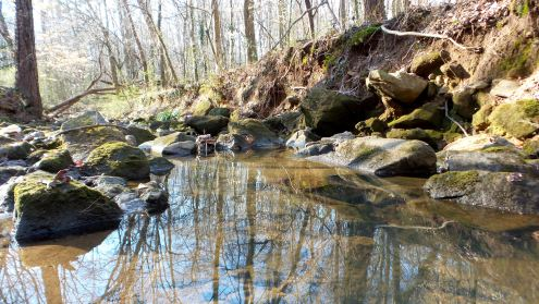 17 Cascade Springs Nature Preserve Utoy Creek