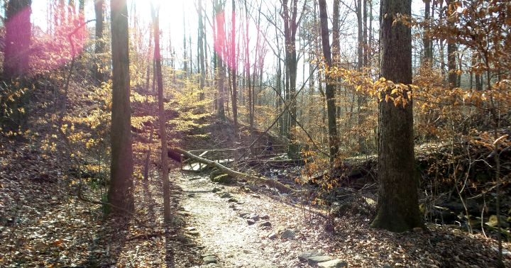 22 Cascade Springs Nature Preserve Hiking Trails.jpg