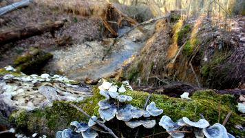 39 Fungi and Moss Cascade Springs Nature Preserve
