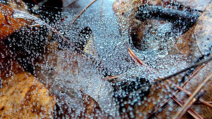 6 East Palisades Spiderwebs