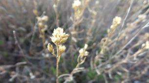 24 Thompson Viewing Area Utah Desert Bud
