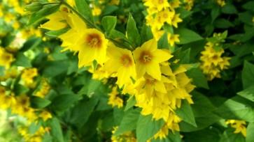 05 Jensen Olson Arboretum Alaska Flowers