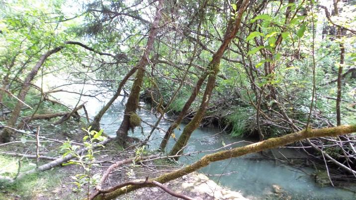 10 West Glacier Trail Mendenhall Glacier Hiking Trail