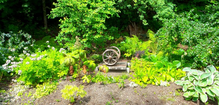 15 Jensen Olson Arboretum Alaska Flowers