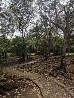 Hiking Trail Mexico Cozumel