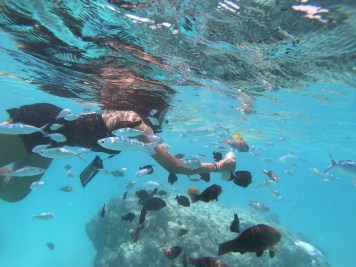 Alexis-Chateau-Snorkelling-Fish-Feeding-30