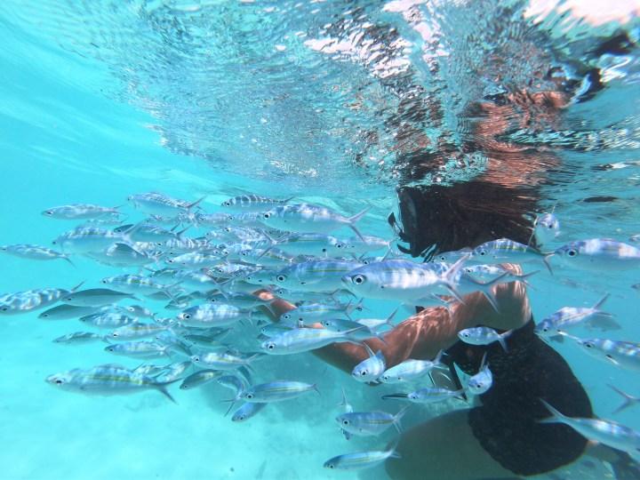 Solo Trip to The Maldives: Snorkelling & Fish Feeding at Rasdhoo Madivaru Finolhu (The Sandbank)