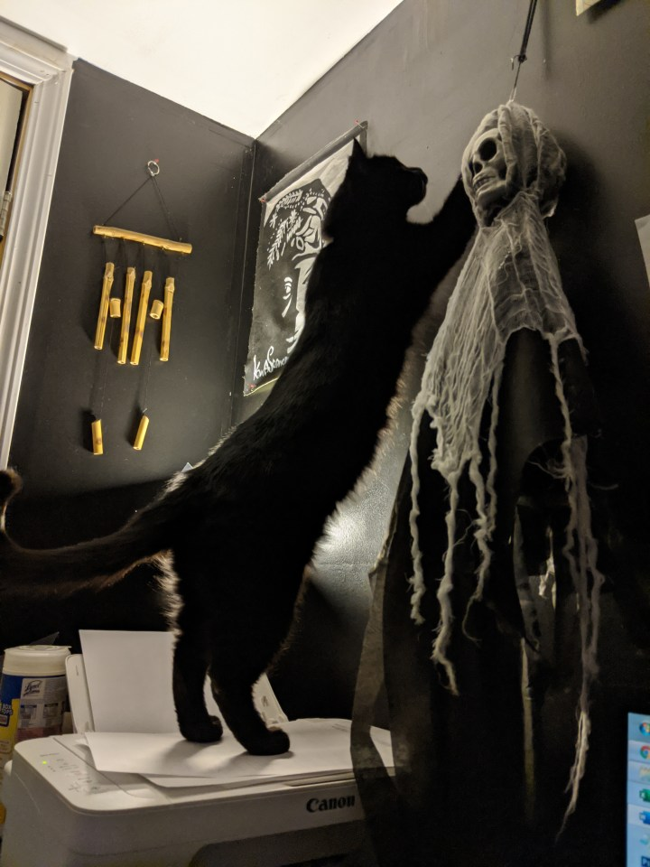 5 Surprising Things My Cat Has Become Notorious for Stealing