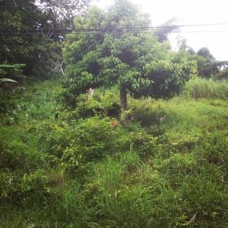 jamaica nature travel