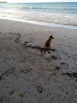 dog beach jamaica travel