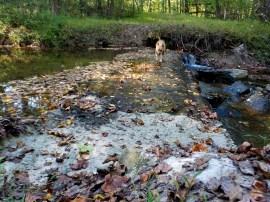 dog hiking trail travel adventure