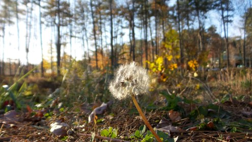 nature blossom pollen hiking trail