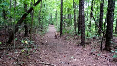 hiking trail adventure dog