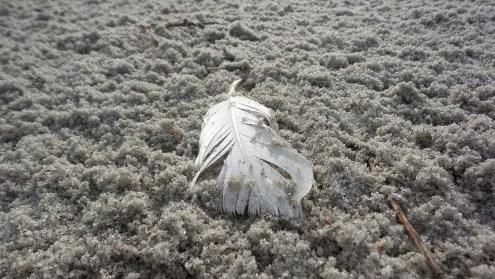 myrtle-beach-finds-8