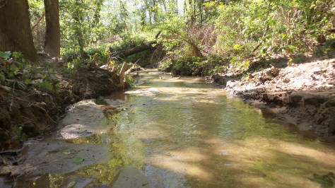 9 Stream on Depende Park Hiking Trail