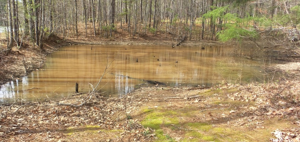 Pond at Georgia Hiking Trail 2