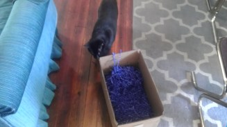 bagheera automattic box