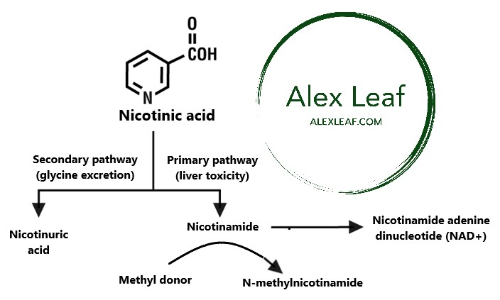 acipimox niacina para diabetes