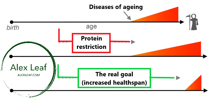 Why protein restriction for longevity makes no sense