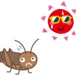 コオロギの飼い方_飼育環境その2 夏のヨーロッパイエコオロギ
