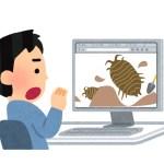 【閲覧注意】ワラジムシの飼い方(虫画像あります)