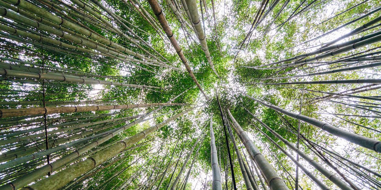 Taiwan Bamboo Forest