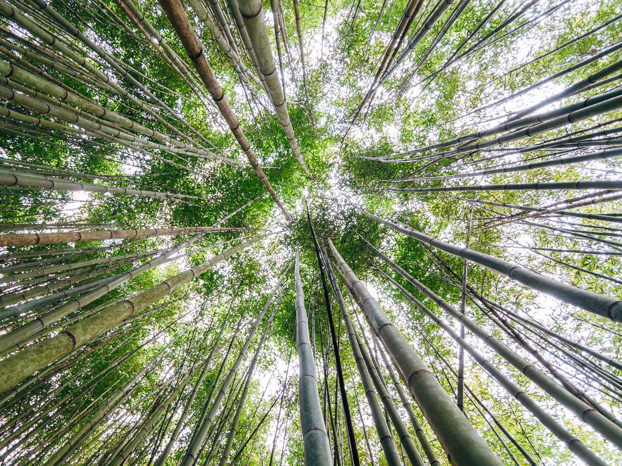 Taiwan Nanou County Bamboo Forest