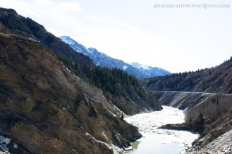 Can you spot the dall sheep?