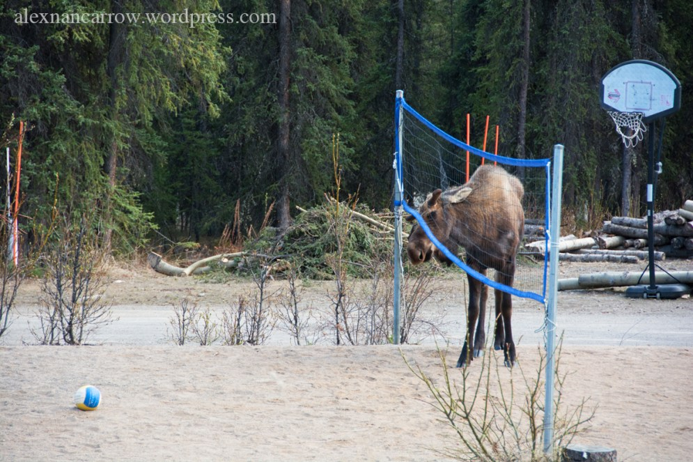 Moose Volleyball Court 3