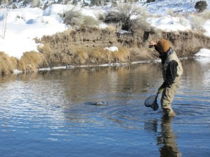 12/29/12: Water was freezing to our rods, but the fish were biting. East Walker River, CA
