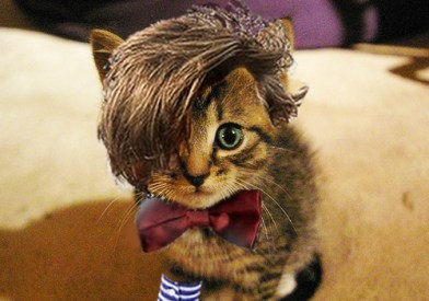 doctor-who-cat
