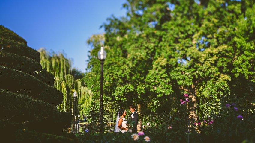 wedding portrait in front of rose bushes