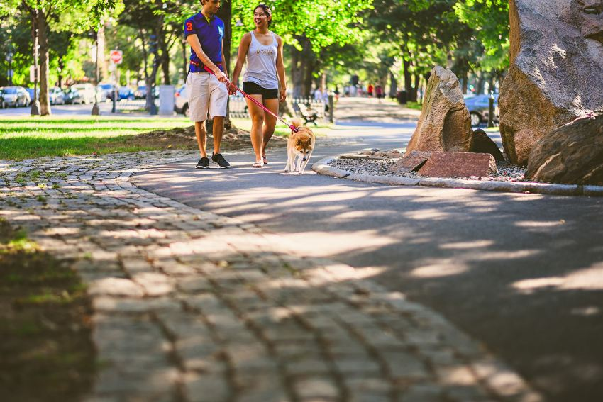 bride and groom walking dog in Emerald Necklace
